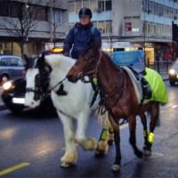 Häst i stad