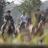 Kvalitetssäkring av svenskt hästföretagande – behövs det?